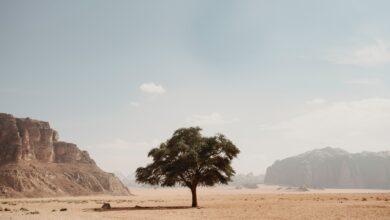 V africké poušti se nachází přes 1,8 miliardy stromů
